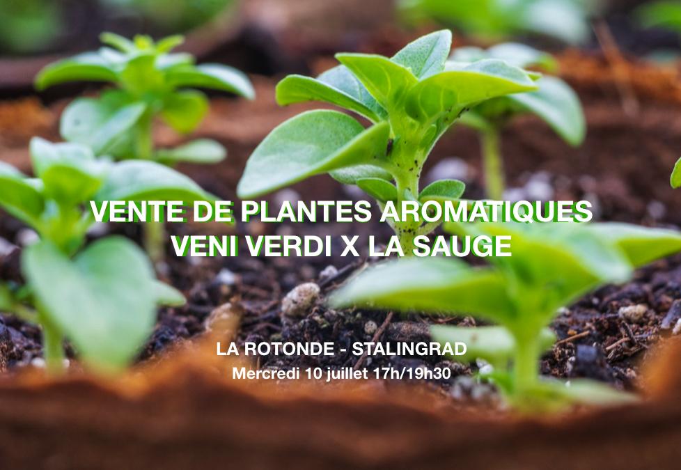 Vente de plantes aromatiques avec Veni Verdi X La Sauge
